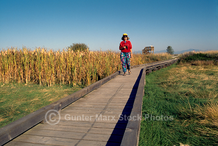 Woman walking on Boardwalk, and birdwatching / watching for Birds in Marsh, Boundary Bay Regional Park, Delta, BC, British Columbia, Canada (Model Released)