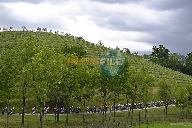 The peloton during Stage 15 of the 2021 Giro d'Italia, running 147km from Grado to Gorizia, Italy. 23rd May 2021.  <br /> Picture: LaPresse/Fabio Ferrari   Cyclefile<br /> <br /> All photos usage must carry mandatory copyright credit (© Cyclefile   LaPresse/Fabio Ferrari)