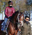 Likeable, trained by trainer Todd A. Pletcher, exercises in preparation for the Breeders' Cup Juvenile at Keeneland Racetrack in Lexington, Kentucky on November 3, 2020.