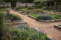 Wildflower, native plant demonstration garden groundcover beds with gravel, dirt paths at Lady Bird Johnson Wildflower Center, Austin Texas