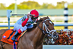 20 February 2010: Corageous Cat with Garrett Gomez wins the The Canadian Turf Stakes Grade 3 at Gulfstream Park in Hallandale Beach, FL