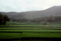 So. Korea: Rice paddies--contoured fields. Photo '81.