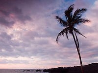 A palm tree at sunset, North Kohala, Big Island.