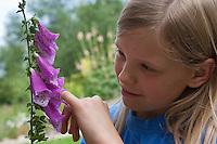 Mädchen Kind steckt Finger in Roter Fingerhut, Detail einer Blüte, Digitalis purpurea, Foxglove
