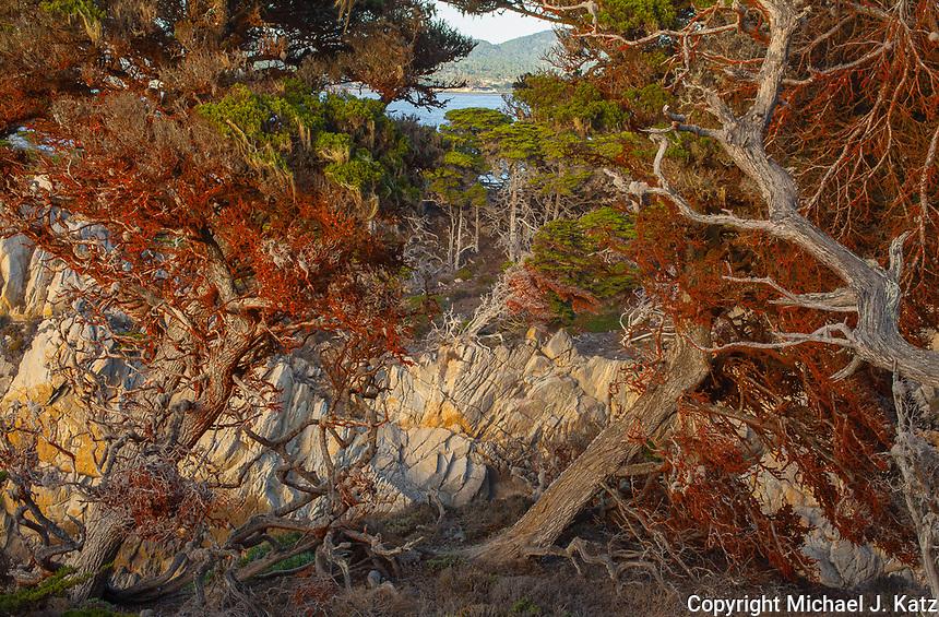 Trees, Point Lobos