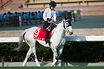SHA TIN,HONG KONG-DECEMBER 08 : Smart Layer,trained by Ryuji Okubo,exercises in preparation for the Hong Kong  at Sha Tin Racecourse on December 8,2017 in Sha Tin,New Territories,Hong Kong (Photo by Kaz Ishida/Eclipse Sportswire/Getty Images)