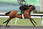 April 03, 2014: Hip 79 Blame - Bisbee's Prospect consigned by Wavertree Stables worked 1/8 in 10:2.  Candice Chavez/ESW/CSM