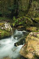 Europe, France, Aquitaine, Pyrénées-Atlantiques, Béarn, Vallée d'Aspe, env Osse-en-Aspe:  Gave d'Aspe en Forêt d'Issaux // Europe, France, Aquitaine, Pyrenees Atlantiques, Bearn, Aspe Valley, near Osse en Aspe: Forest of Issaux and Gave d'Aspe