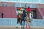 January 22, 2021: Caddo River (7) with jockey Florent Geroux aboard before the running of the Smarty Jones Stakes at Oaklawn Racing Casino Resort in Hot Springs, Arkansas on January 22, 2021. Justin Manning/Eclipse Sportswire/CSM