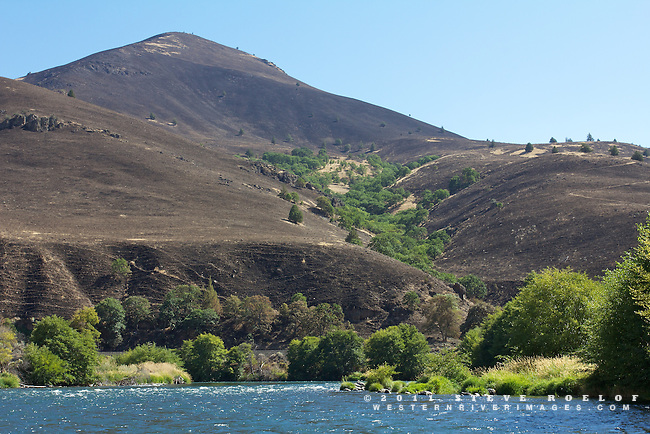 Charred hillsides from the Razorback Fire near the norther border of the Warm Springs Reservation and the town of Dant. Oregon oak trees survive in the green drainage.