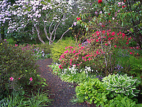 Garden path and blooming plants. The Connie Hansen Garden. Lincoln City, Oregon