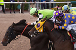 February 7, 2015: Valid (lime green cap) ridden by Paco Lopez battles to the finish to win the Fred W. Hooper (G3) at  Gulfstream Park. Gulfstream Park, Hallandale Beach (FL). Arron Haggart/ESW/CSM