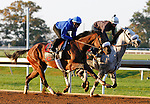 October 22, 2015:  Salama, trained by Charles Lopresti, and owned by Maria Santa Inc., is entered in the Breeder's Cup Longines Distaff Grade 1 $2,000,000.  Candice Chavez/ESW/CSM