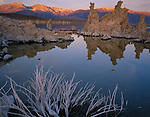 Mono Basin Scenic Area, CA<br /> Pastel colors of sunrise on a bleached sagebrush skeleton and distant tufa towers from the south shore of Mono Lake