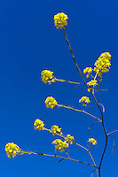 Blüte auf Sizilien, Italien