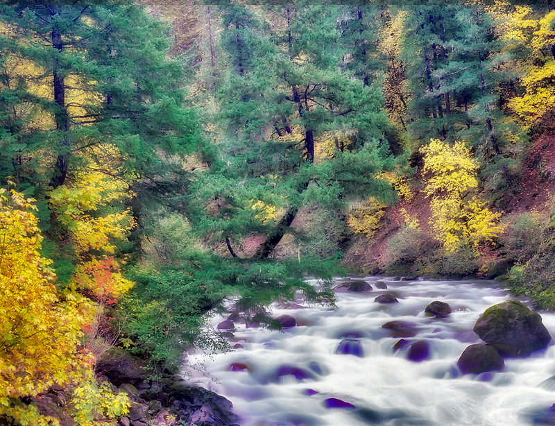 North Fork of the Middle Fork Willamette River with fall color. Aufderheide National Scenic Byway. Oregon.