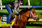 April 27, 2021: Sainthood, trained by trainer Todd Pletcher, gallops on the track at Churchill Downs on April 27, 2021 in Louisville, Kentucky. John Voorhees/Eclipse Sportswire/CSM