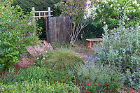 Low growing perennials in front yard lawn substitute with California native plants, Heath-Delaney garden