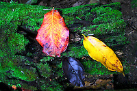 Rainforest Leaves, Christmas Island, Indian Ocean