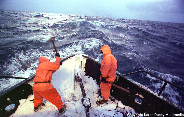 """Heaving sledgehammers, two crew members begin a frigid January morning in 1995 by smashing a coat of frozen sea spray from the bow of the Polar Lady during opilio crab season in the Bering Sea. An iced-over boat can become dangerously top-heavy in rough seas and roll over. After four or so hours of sleep deckhands rise, beat ice off the boat with baseball bats and sledgehammers, and begin fishing. Crab fishing in the Bering Sea is considered to be one of the most dangerous jobs in the world.  This fishery is managed by the Alaska Department of Fish and Game and is a sustainable fishery.  The Discovery Channel produced a TV series called """"The Deadliest Catch"""" which popularized this fishery. Today this fishery, largely based out of Dutch Harbor, AK has been consolidated resulting in a lot less boats fishing."""