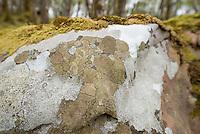 Carnach Woodland Wanderweg (Carnach Woodland Trail) nahe der Ortschaften Milltown und Applecross.<br /> Der Wanderweg fuehrt durch ein Gebiet der vor ca. 4.000 Jahren als mystischer Ort galt und von zahlreichen unterirdischen Energielinien durchzogen ist.<br /> Im Bild: Gemusterte Felsen.<br /> 23.5.2015, Highlands/Schottland<br /> Copyright: Christian-Ditsch.de<br /> [Inhaltsveraendernde Manipulation des Fotos nur nach ausdruecklicher Genehmigung des Fotografen. Vereinbarungen ueber Abtretung von Persoenlichkeitsrechten/Model Release der abgebildeten Person/Personen liegen nicht vor. NO MODEL RELEASE! Nur fuer Redaktionelle Zwecke. Don't publish without copyright Christian-Ditsch.de, Veroeffentlichung nur mit Fotografennennung, sowie gegen Honorar, MwSt. und Beleg. Konto: I N G - D i B a, IBAN DE58500105175400192269, BIC INGDDEFFXXX, Kontakt: post@christian-ditsch.de<br /> Bei der Bearbeitung der Dateiinformationen darf die Urheberkennzeichnung in den EXIF- und  IPTC-Daten nicht entfernt werden, diese sind in digitalen Medien nach §95c UrhG rechtlich geschuetzt. Der Urhebervermerk wird gemaess §13 UrhG verlangt.]