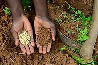 BURKINA FASO, Bobo Dioulasso, hand with soy hybrid seeds and soil / Aussaat von Soja Hybrid Saatgut, Haende mit Saatgut und Boden