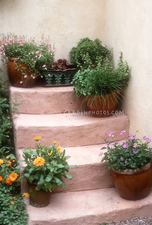 Container garden on steps that go nowhere, planters with annual flowrs and herbs, house wall, pink stairs