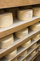 Europe/France/Aquitaine/64/Pyrénées-Atlantiques/Pays Basque/ Saint-Martin-d'Arberoue: Ferme Agerria  de Bernadette et Jean-Claude Pochelu -  Préparation de l'AOC Ossau-Iraty - L'affinage: placé dans une cave humide,le fromage est régulièrement retourné.