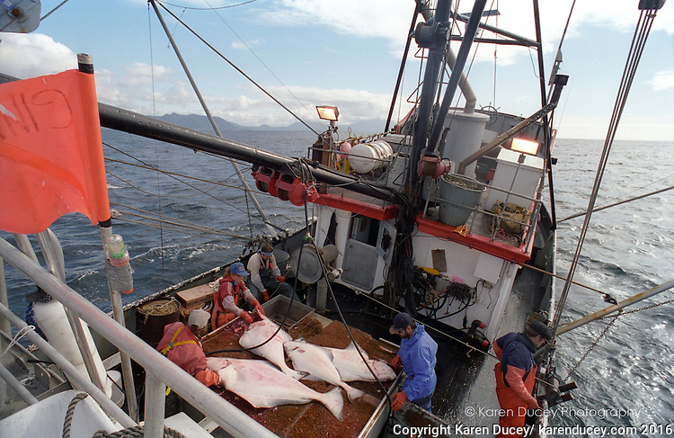 halibut fishing (© Karen Ducey Photography)