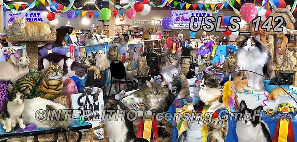 Lori, REALISTIC ANIMALS, REALISTISCHE TIERE, ANIMALES REALISTICOS, zeich, paintings+++++Cat Show Puzzle_7_72,USLS142,#a#, EVERYDAY ,puzzle,puzzles