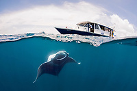 reef manta ray, Manta alfredi, feeding on plankton, with dhoni dive tender boat on surface, just outside Hanifaru Bay, Baa Atoll, Maldives, Indian Ocean
