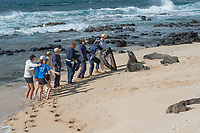 NOAA researchers attempt to capture a Hawaiian monk seal, Neomonachus schauinslandi, Critically Endangered endemic species, in order to put a Crittercam and tracking instrumentation on it; west end of Molokai, Hawaii, photo taken under NOAA permit 10137-6, Ho ike a Maka Project