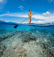 green sea turtles, Chelonia mydas gathering at a cleaning station, below girl on a stand-up paddleboard, Maui, Hawaii, USA, Pacific Ocean, MR