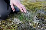 Foto: VidiPhoto<br /> <br /> LOENEN – Bos en hei op de Loenermark bij Loenen. Het Veluwse natuurgebied heeft net als de rest van de Veluwe veel last van verzuring en vermesting, veroorzaakt door een teveel aan stikstofneerslag. Gevolg is dat planten afsterven, insecten verdwijnen en eikenbomen dood gaan. Op een aantal plekken op de Veluwe is 90 procent van de eiken al afgestorven. Foto: Het gewenste borstelgras neemt in snel tempo af.