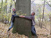 Erwachsene umfassen den dicken Stamm einer alten Eiche, Quercus robur