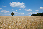 Europa, DEU, Deutschland, Baden-Wuerttemberg, Odenwald, Neckar-Odenwald-Kreis, Typische Landschaft im Sommer, Cumuluswolken, Baum, Natur, Umwelt, Landschaft, Jahreszeiten, Stimmungen, Landschaftsfotografie, Landschaften, Landschaftsphoto, Landschaftsphotographie, <br /> <br /> [Fuer die Nutzung gelten die jeweils gueltigen Allgemeinen Liefer-und Geschaeftsbedingungen. Nutzung nur gegen Verwendungsmeldung und Nachweis. Download der AGB unter http://www.image-box.com oder werden auf Anfrage zugesendet. Freigabe ist vorher erforderlich. Jede Nutzung des Fotos ist honorarpflichtig gemaess derzeit gueltiger MFM Liste - Kontakt, Uwe Schmid-Fotografie, Duisburg, Tel. (+49).2065.677997, ..archiv@image-box.com, www.image-box.com]