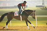 DUBAI,UNITED ARAB EMIRATES-MARCH 30: Forever Unbridled,trained by Dallas Stewart,exercises in preparation for the Dubai World Cup at Meydan Racecourse on March 30,2018 in Dubai,United Arab Emirates (Photo by Kaz Ishida/Eclipse Sportswire/Getty Images)
