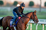 November 4, 2020: Leinster, trained by trainer George R. Arnold II, exercises in preparation for the Breeders' Cup Turf Sprint at Keeneland Racetrack in Lexington, Kentucky on November 4, 2020. Scott Serio/Eclipse Sportswire/Breeders Cup