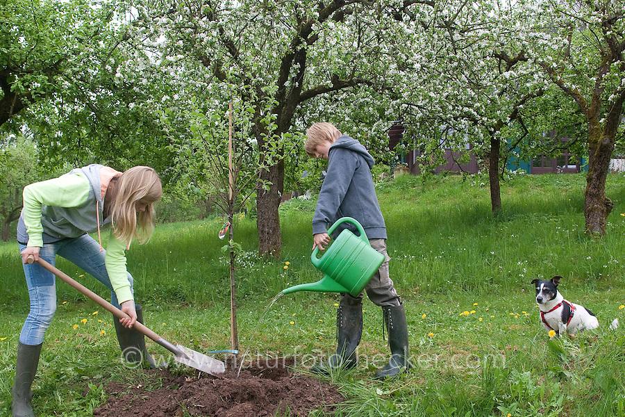 Apfelbaum pflanzen, Kinder, Geschwister, Junge und Mädchen pflanzen einen Obstbaum, Baum im Garten, Streuobstwiese, Kultur-Apfel, Apfel, Obstplantage, Obstanbau, Obst, während der Blüte, Apfelbaumblüte, Malus domestica, Apple, Pommier commun