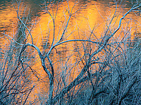 Leafless winter branches form an abstract design with red, yellow and orange colors reflecting in the Colorado River near Moab, Utah.