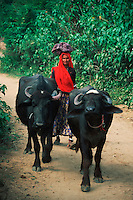 Domestic asian water buffalo (Bubalus bubalis) and Indian women carrying bag on head, Rajasthan, India