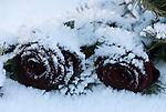 Italy, Alto Adige, South Tyrol, Val Gardena, Ortisei: winterly grave side decorations, cemetery | Italien, Suedtirol, Groednertal, St. Ulrich: winterlicher Grabschmuck auf dem Friedhof