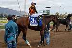 """ARCADIA, CA  SEPTEMBER 29:#3 Paradise Woods, ridden by Abel Cedillo, returns to the connections after winning the Zenyatta Stakes (Grade ll) """"Win and You're In Breeders' Cup Distaff Division, on September 29, 2019 at Santa Anita Park in Arcadia, CA.<br /> (Photo by Casey Phillips/Eclipse Sportswire/CSM"""