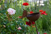 Unser Naturgarten in Hammer, Garten, insektenfreundlicher Garten, vogelfreundlicher Garten, blütenreich, Wildblumen, Wildblumengarten, Mohn, Klatschmohn, Rose, Rosen, Vogeltränke, Tränke, Wasserschale, Trinknapf, drinking trough