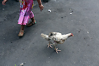 A young Indonesian girl walks past a chicken in a slum community in central Jakarta. It is estimated over 25% of Indonesians live in slum areas, with more than 5 million people living in slum areas in the greater Jakarta area.