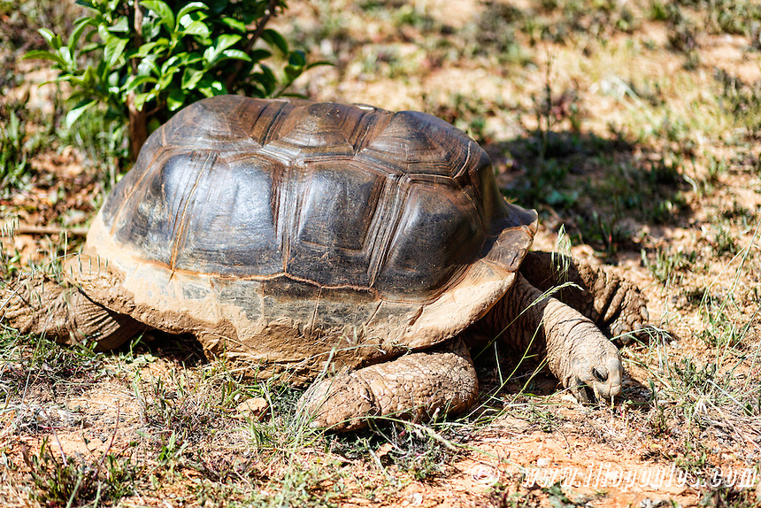 Giant turtle in the zoo