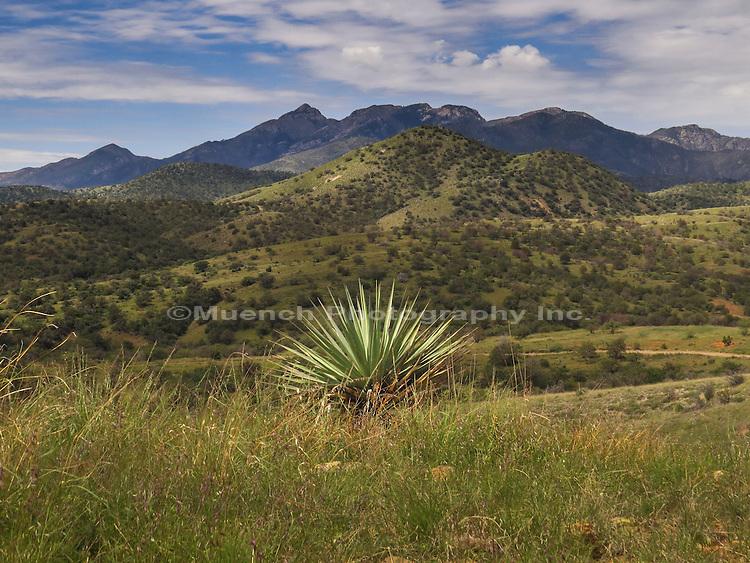 Santa Rita Mountains in Arizona.