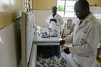 KENIA, County Bungoma, GIZ Projekt Gruene Innovationszentren, WSK Milch, SANGÁLO Institute of Science and technology, Joghurt Herstellung