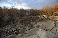 White smoke of a fire underground is seen in the national park of Las Tablas de Daimiel, in Ciudad Real on November 16, 2009. The European Union launched an investigation into Spanish wetland that has turned bone dry through mismanagement of water resources  from areas where fish once swam. The EU wants the Spanish government to explain how it plans to save Las Tablas de Daimiel National Park.The park, one of Spain's few wetlands, is classified as a UNESCO biosphere site and an EU-protected area because of its birdlife. But it has been drying up for decades, largely because of wells dug by farmers on the edges of the park to tap an aquifer that feeds the wetland's lagoons. Many of the wells are illegal. Environmentalists call this case a particularly glaring example of how a natural resource can be abused. (c)Pedro ARMESTRE