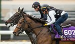 DEL MAR, CA - OCTOBER 29:   Lady Aurelia, owned by Stonestreet Stables, LLC & Peter Leidel and trained by Wesley A. Ward, exercises in preparation for Breeders' Cup Turf Sprint at Del Mar Thoroughbred Club on October 29, 2017 in Del Mar, California. (Photo by Alex Evers/Eclipse Sportswire/Breeders Cup)